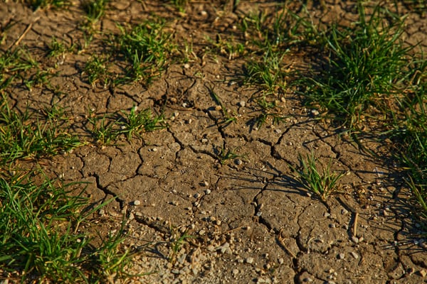 hard-soil